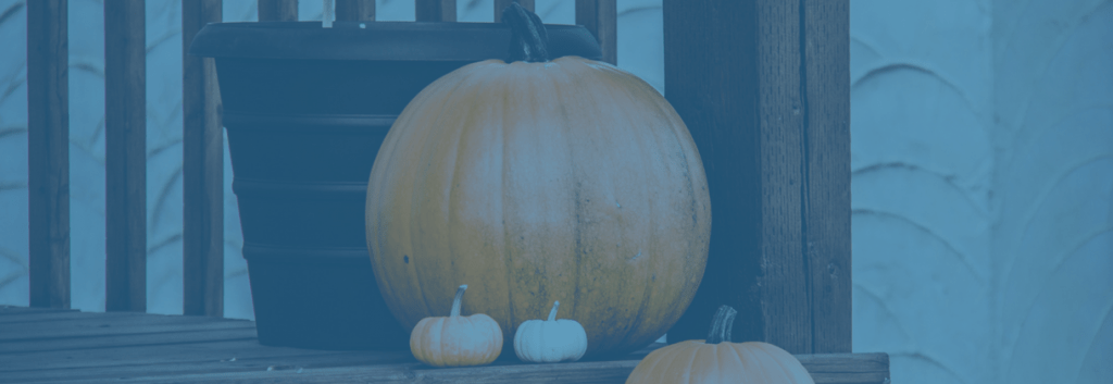 Picture of pumpkins at Thanksgiving